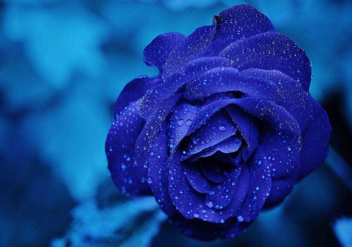 cây hoa phong thủy 1