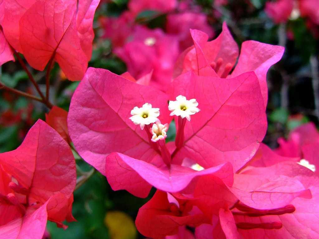 cây hoa phong thủy 2