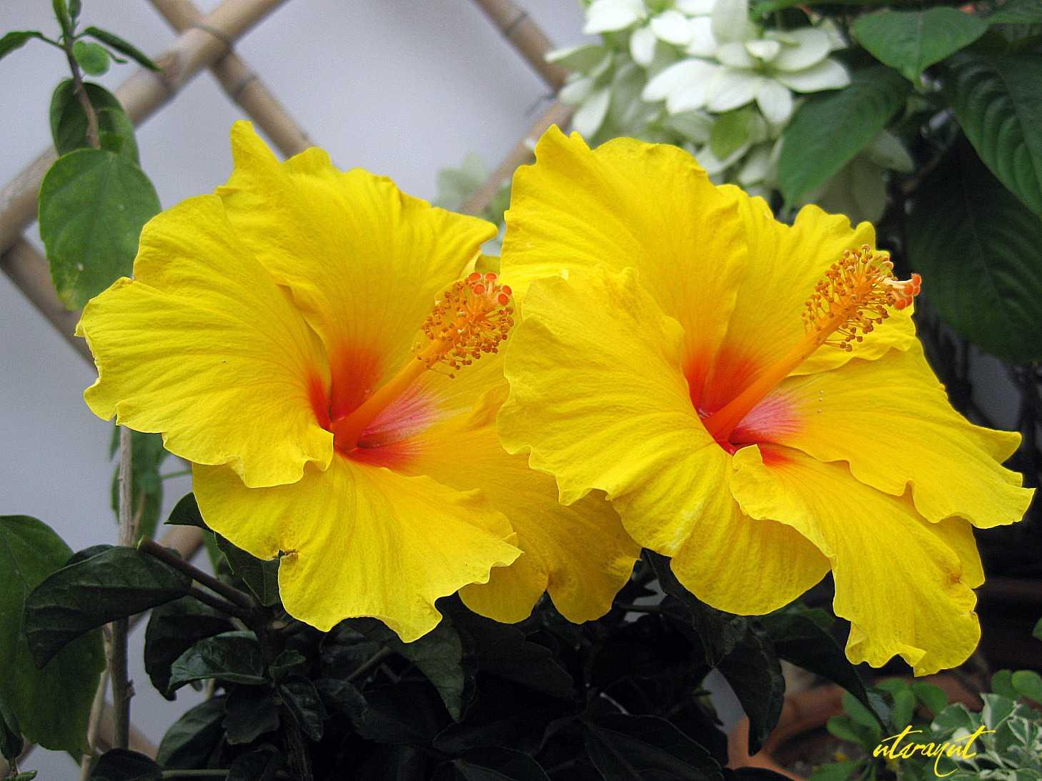 cây hoa phong thủy 5