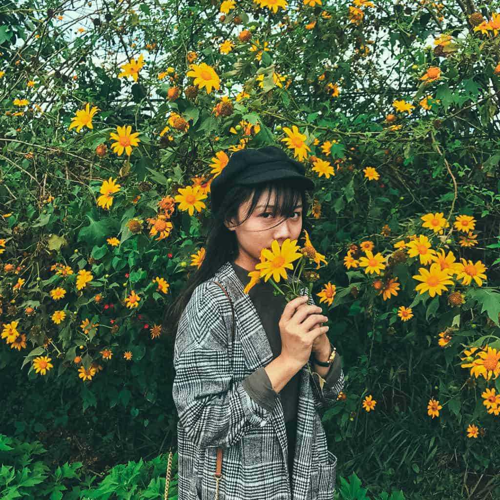 hình ảnh hoa dã quỳ 13