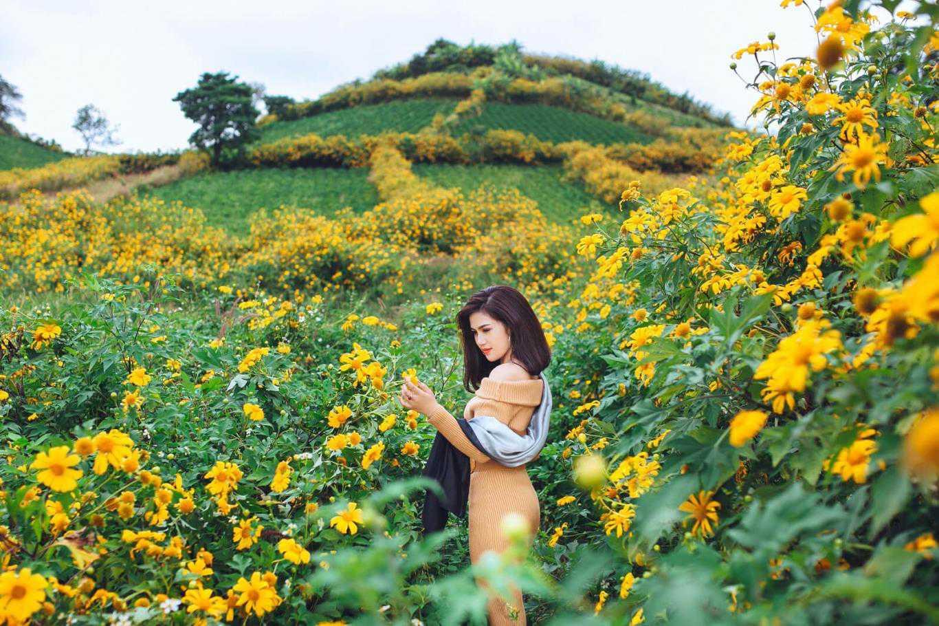 hình ảnh hoa dã quỳ 14