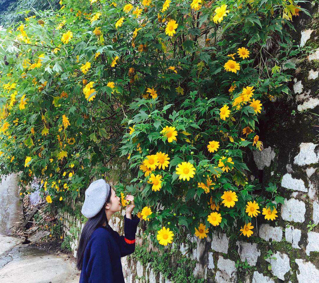 hình ảnh hoa dã quỳ 3