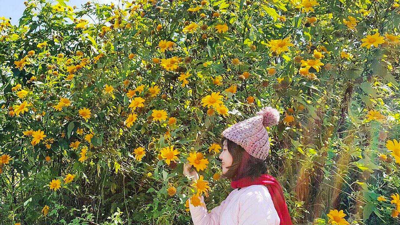 hình ảnh hoa dã quỳ 4