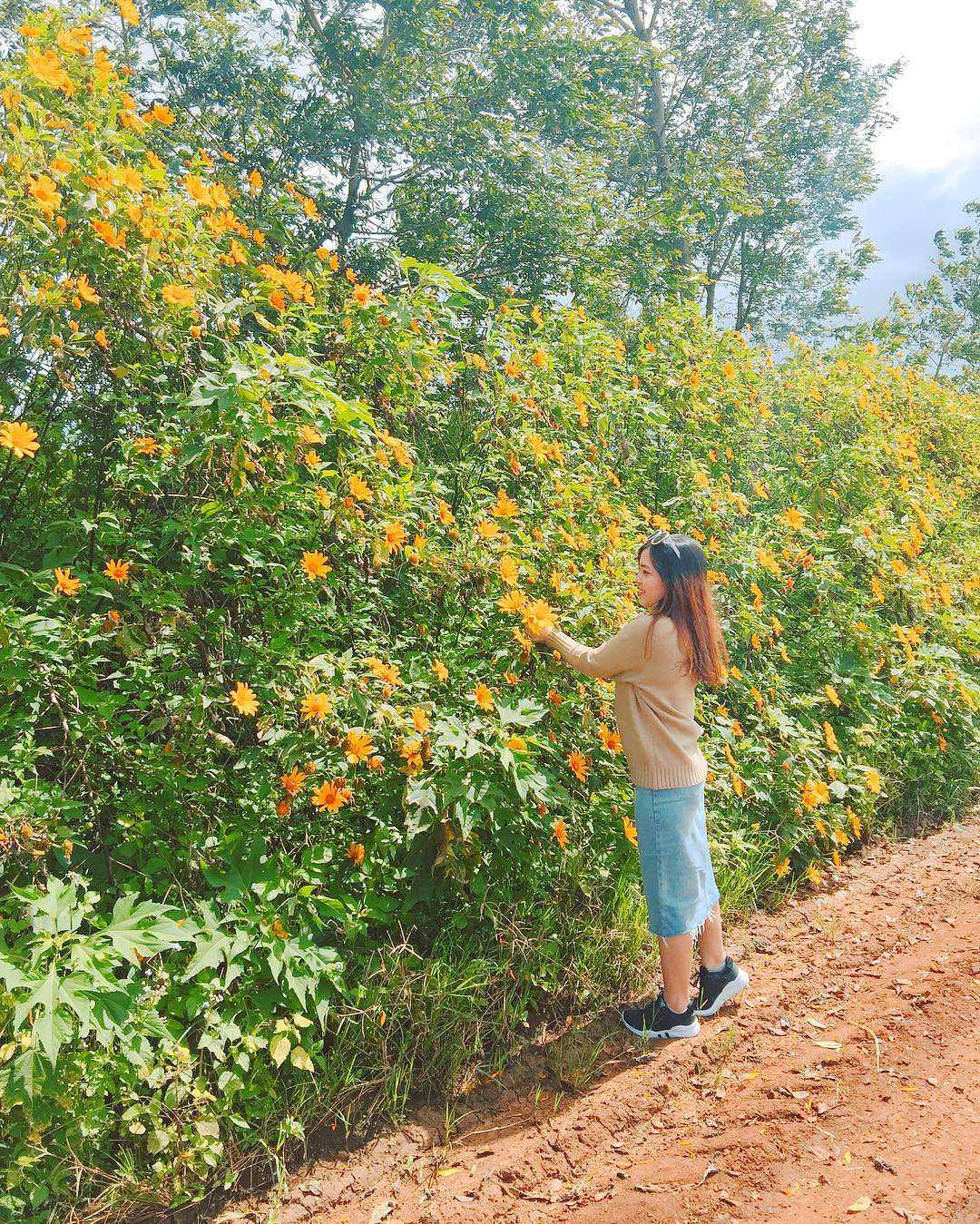 hình ảnh hoa dã quỳ 5