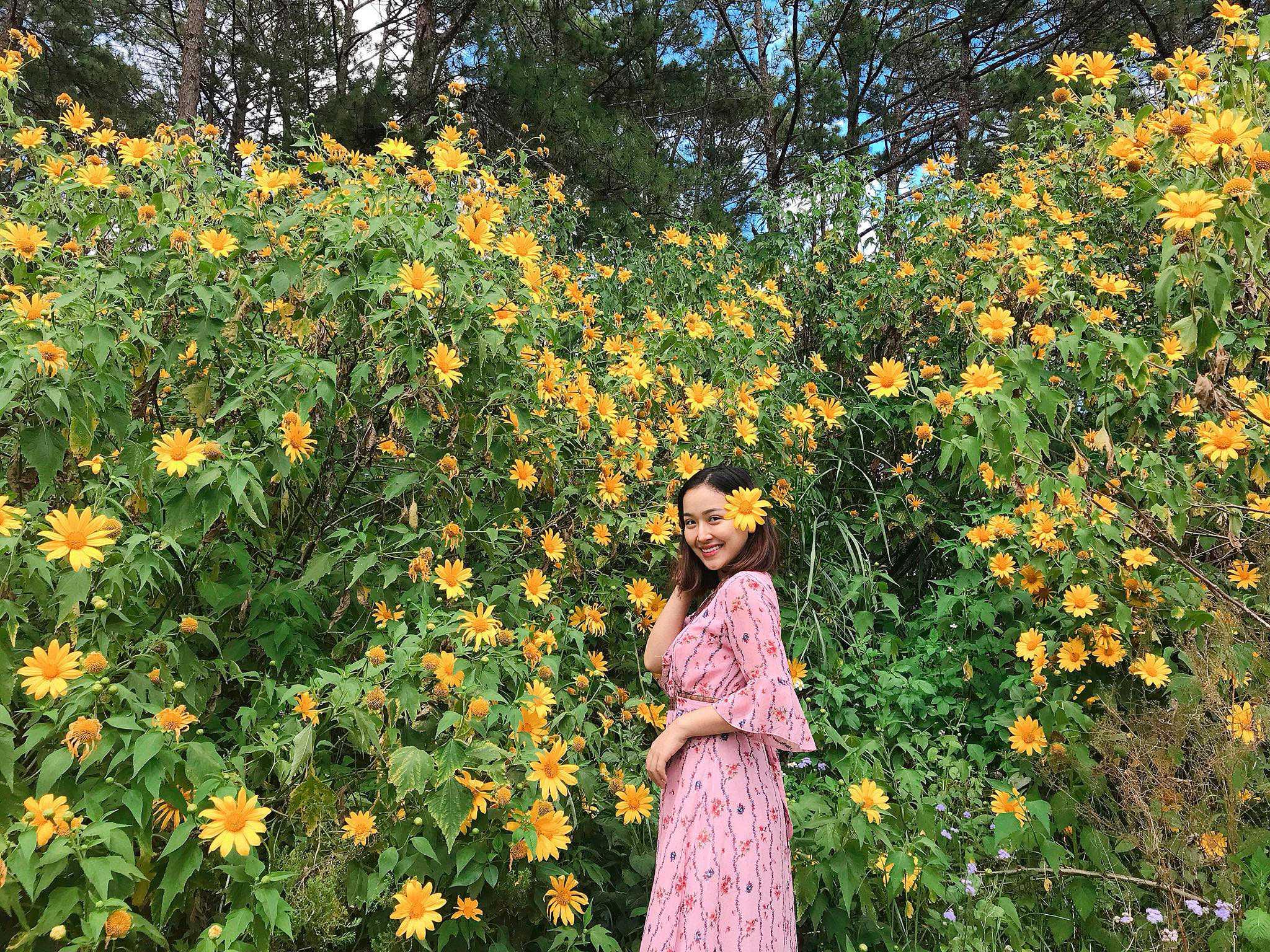 hình ảnh hoa dã quỳ 7