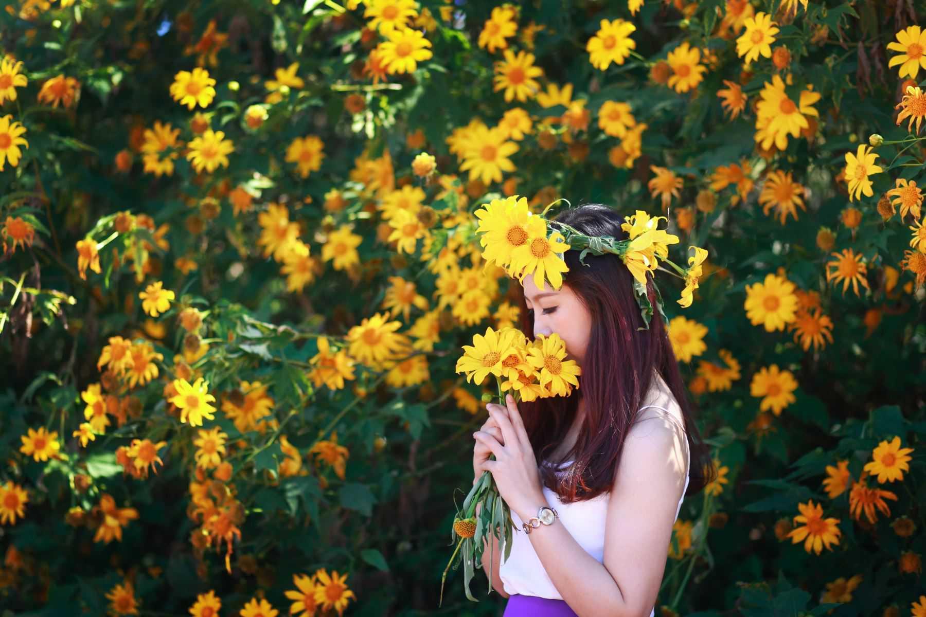 hình ảnh hoa dã quỳ 8