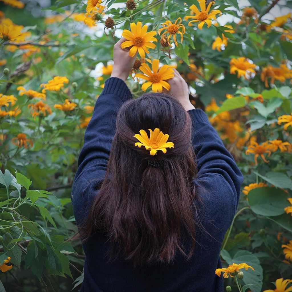 hình ảnh hoa dã quỳ 9